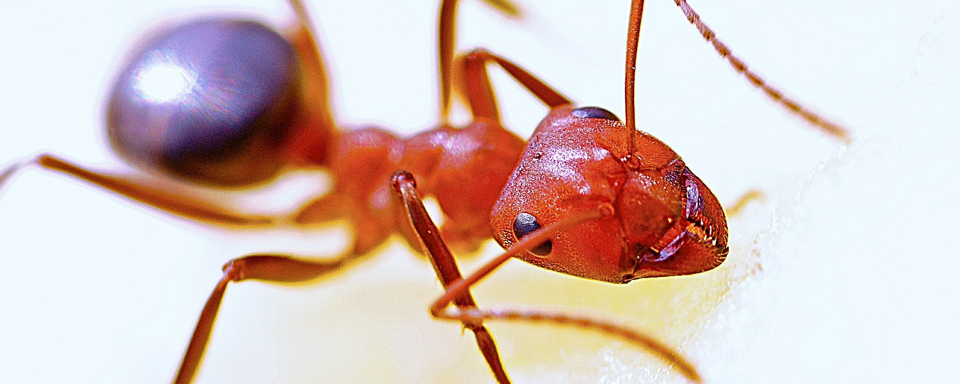 Hormigas, una lucha entre castas. – Crónicas de un Amonite