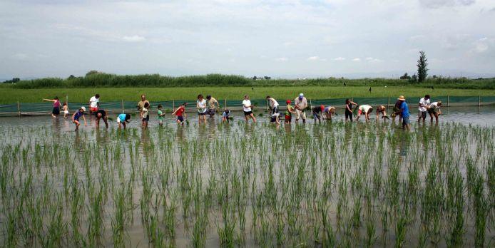 Algunos de los arrozales presentes en el Delta. Fuente: Seo/Bird Life