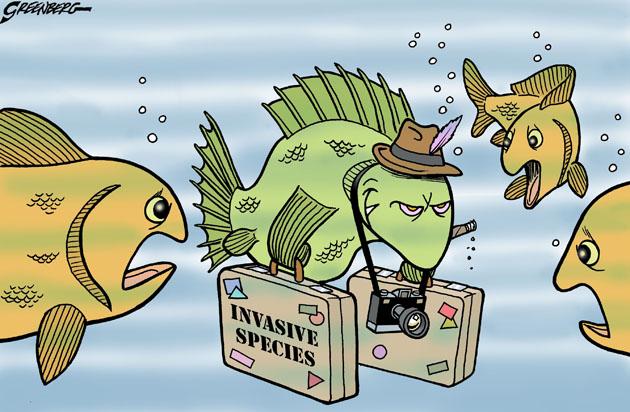 Invasive-illo