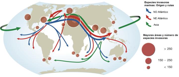 Principales áreas y rutas de entrada de especies marina invasoras. Cómo se puede observar se puede establecer una relación directa entre el transporte marítimo y la llegada de especies invasoras. Adaptado de: international-marine.com