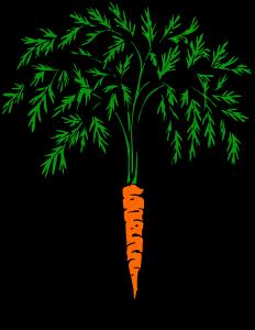 carrot-1299147_960_720