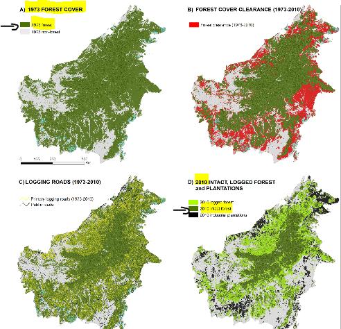 borneo-forest-loss