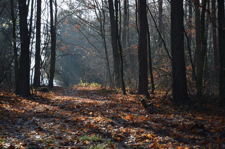 Caída de las hojas
