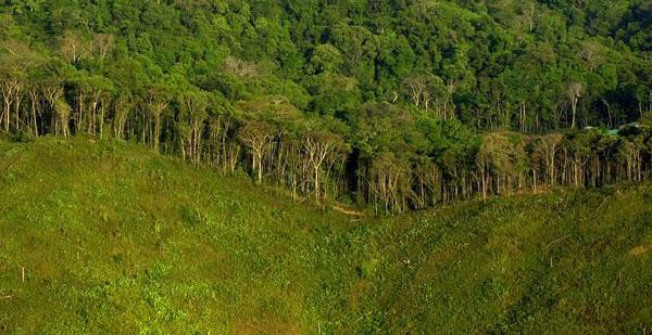 deforestación_panama