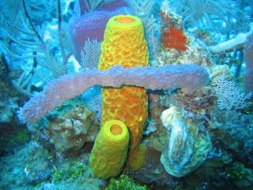 Arrecife de Coral, Costa australiana, Fuente: NOAA