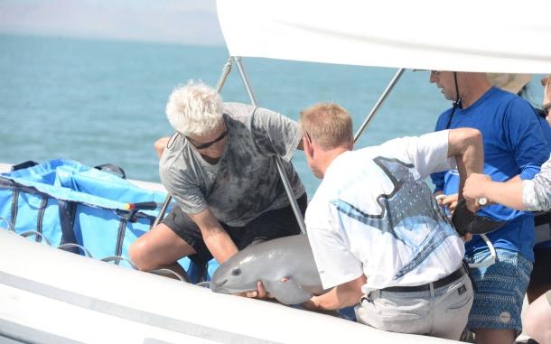 vaquita-marina-rescatada.jpg