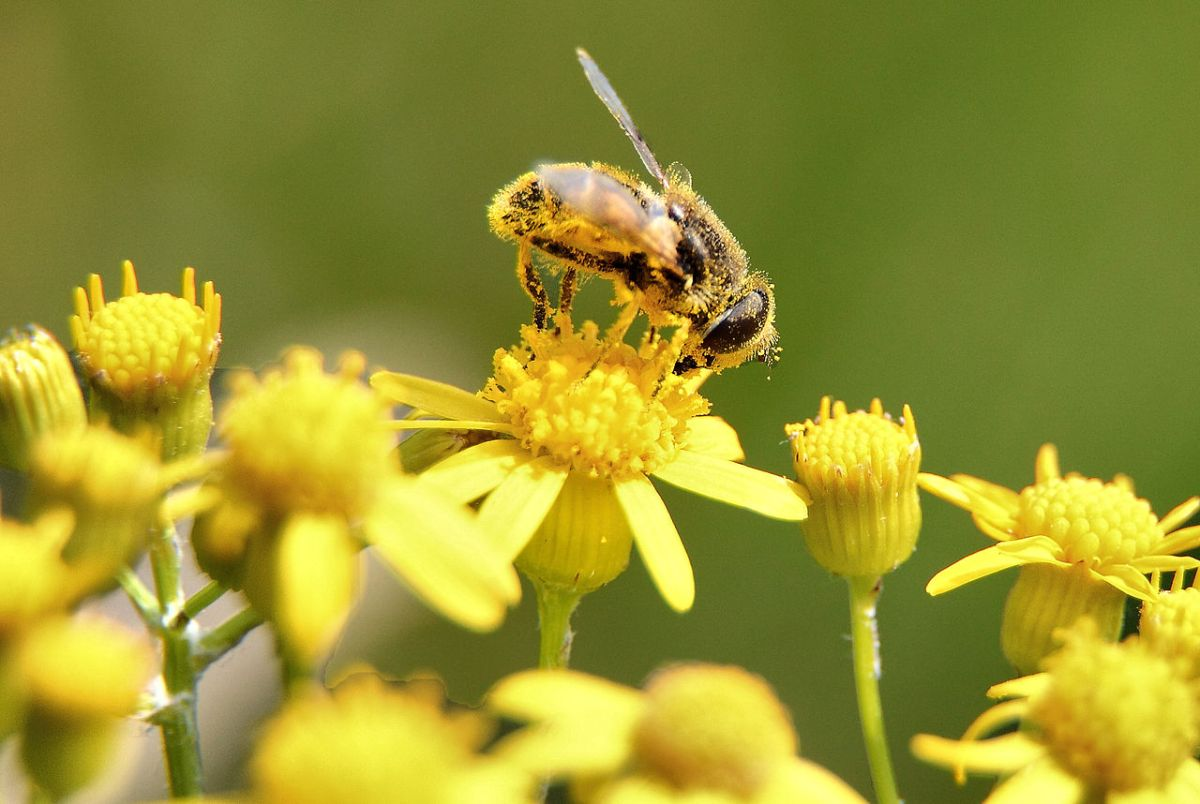 10 curiosidades de abejas